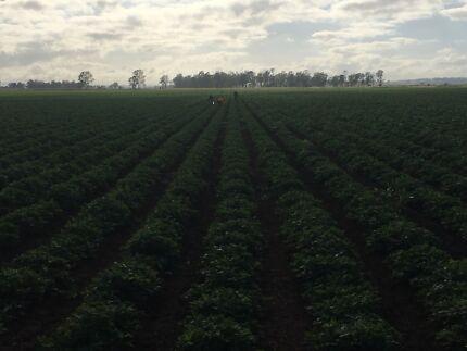 Farm labor  Murgon South Burnett Area Preview