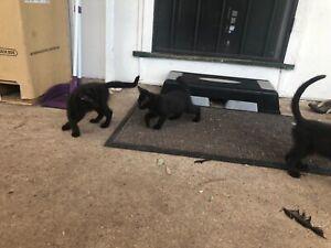 Kittens Free