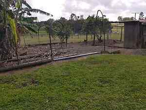 WANTED LAYING CHICKENS Wamuran Caboolture Area Preview