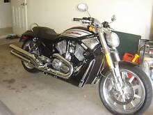 2006 Harley Davidson Street Rod, only 12,000 klms. Caloundra Caloundra Area Preview