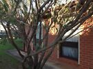 Two bedroom unit for rent in Hectorville Hectorville Campbelltown Area image 2