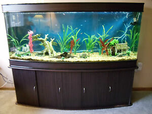 Aquarium complete setup and many extras 125 gallon bow for 125 gallon fish tank stand
