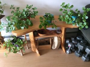 Swedish Ivy House Plant **cat friendly!
