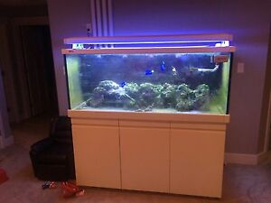 Red Sea Max 650 fish tank, aquarium