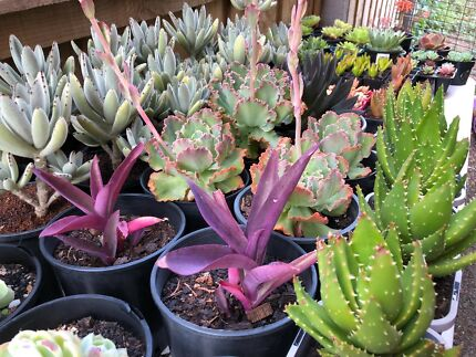 Garage Sale / Plant Sale - succulents and more