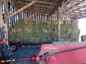 Hay for horses