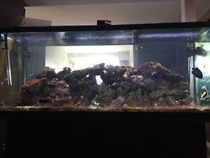 55 gallon and 220 gallon tank for sale
