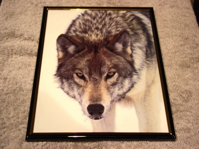 WOLF 8X10 FRAMED PICTURE PRINT #3