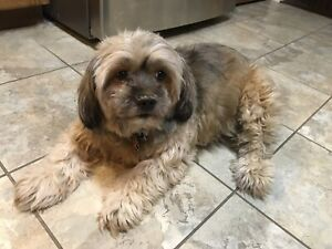 8 year old small dog for rehoming- HOME FOUND