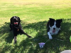 Dog friends wanted! Belfield Canterbury Area Preview