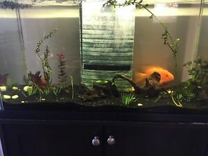 30 Gallon Fish tank, stand & accessories $175