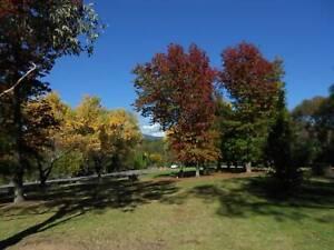 Seeking Walking Partner Chapman Weston Creek Preview