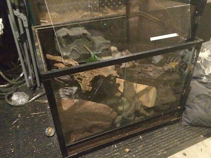 Various tank rocks( exotera) Eagleby Logan Area Preview