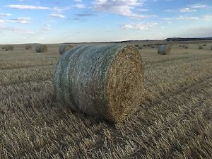 Premium oaten hay..shedded (delivery included) Gawler Gawler Area Preview