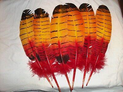 Eagle Hawk Owl Turkey Feather  [ red/yellow o]