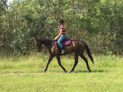 Quiet and safe all rounder horse for sale