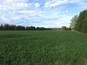 Pasture Land for Rent - Sheep Goats Horses