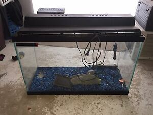 30 Gallon Aquarium  Set Up Kitchener / Waterloo Kitchener Area image 2