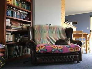$120 bedroom, cats, quiet housesharing with two students Tuart Hill Stirling Area Preview
