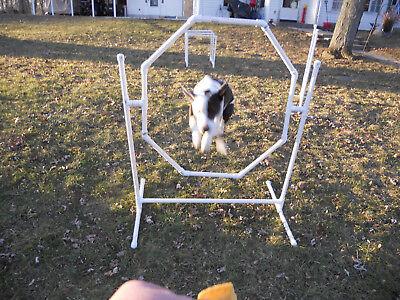 Dog Agility Equipment-Octagon Hoop Jump, Training Agility Jump Ring
