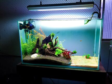 Aquarium plants for sale Paradise Campbelltown Area Preview
