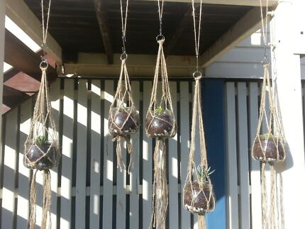Hanging Succulents $10 each! Sandgate Brisbane North East Preview