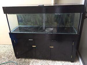 Fish tank 5'3 Mountain Creek Maroochydore Area Preview
