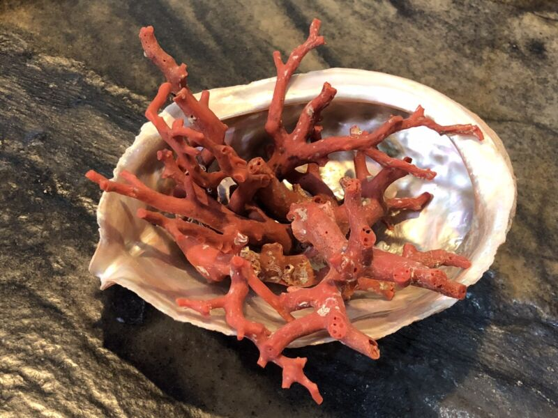 Natural Red Mediterranean Coral Branches Morocco 131 Grams