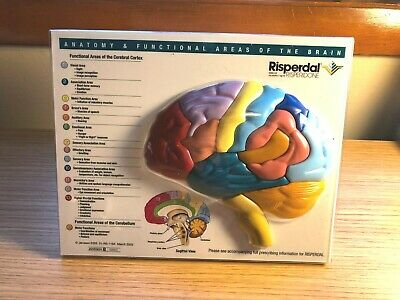 2003 RISPERDAL Anatomy & Functional Areas Of The Brain 3D Model Removable Parts