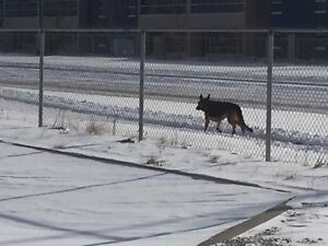 Dog running on west on marquis