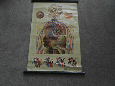 vintage anatomical picture for st.john ambulance by j.teck canvas back wall art