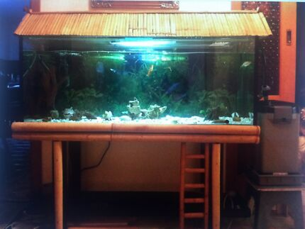 Fish tank with water pump and decorations