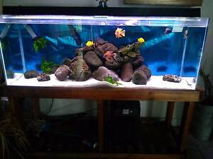 4ft fish tank complete set up Bundall Gold Coast City Preview