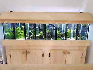 4ft divided  tank with shrimp Caboolture South Caboolture Area Preview