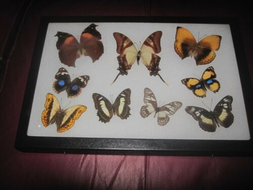 """9 real mounted butterflies framed 8x12"""" riker  mount collection #8x12-18"""
