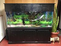Catfish and tank for sale