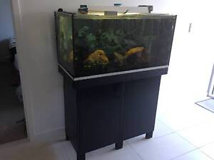 Fish Tank and Accessories South Brisbane Brisbane South West Preview