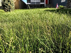 JD Lawn Care Services Fast And Affordable