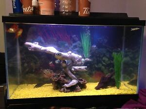 25 gal tank with filter light canopy and stand