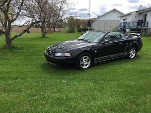 Mustang 2004 convertible 40th