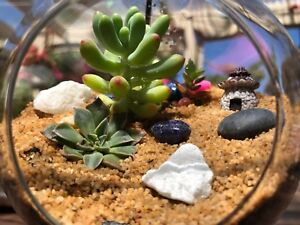Hanging Terrarium Bonsai With 3 Succulwnts Inside Other Home