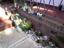 Starting at $3 to $30 - Fancy Planted Succulents Wollongong 2500 Wollongong Area Preview