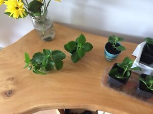 House plant starters