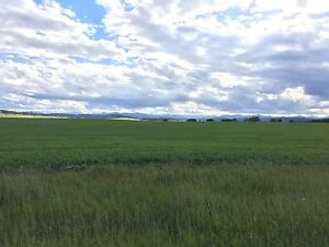 Looking for pasture to rent in Foothills