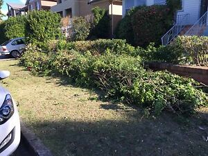 WANTED: Tree removal and pile of logs taken away. Matraville Eastern Suburbs Preview