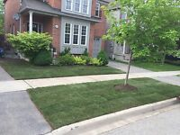 Dave's Forevergreen Sod Installation $1.00/sq.ft