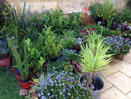 LUSH LANDSCAPING PLANTS FOR SPRING from $5 Joondalup Joondalup Area Preview