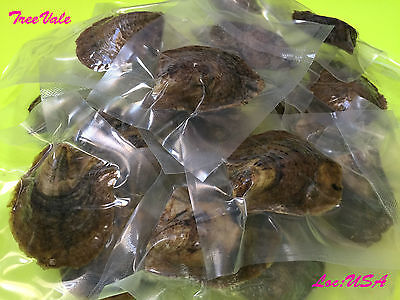 20 Akoya Oysters with LARGE pearls - Individually Vacuum Sealed