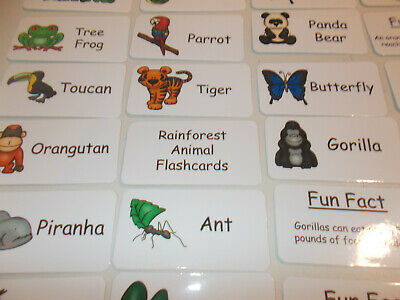 Rainforest Animal Pictures - Rainforest Animals Picture and Word Flash Cards.  Preschool Educational Reading.