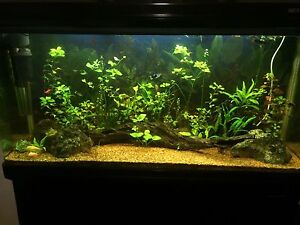 4 feet fish tank Attadale Melville Area Preview